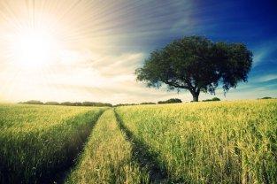 sunny_days_3_by_kokoshadow-d2xwxjl